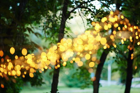 garlands: Sparkling garlands on trees in park