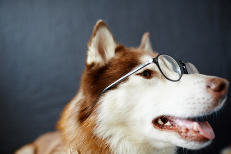 Wise doggy Stock Photo
