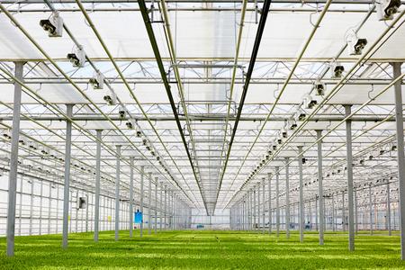 Vegetation in greenhouse Stock Photo
