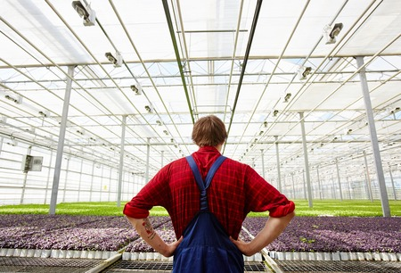 Farmer in hothouse