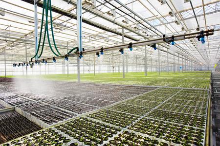 Irrigating seedlings