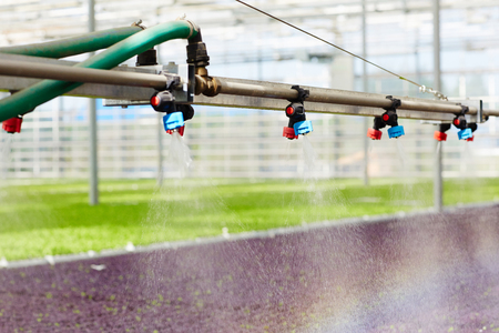 Irrigation in greenhouse