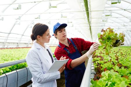 Landbouwontwikkeling