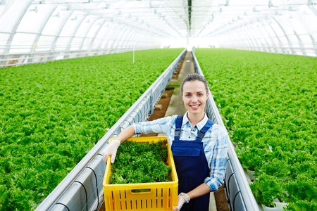 Worker of greenhouse