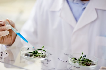 Close-up shot of unrecognizable biologist wearing white coat and rubber gloves using pipette in order to add liquid to Petri dish containing seedlings Banco de Imagens - 87575649