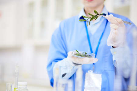 Unrecognizable biologist holding Petri dish with seedling in hand while carrying out experiment at modern laboratory, blurred background