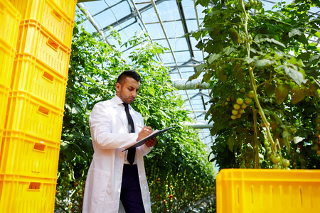 Young selectionist checking plants Stock Photo