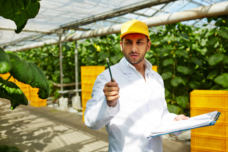 checking New sort of cucumbers