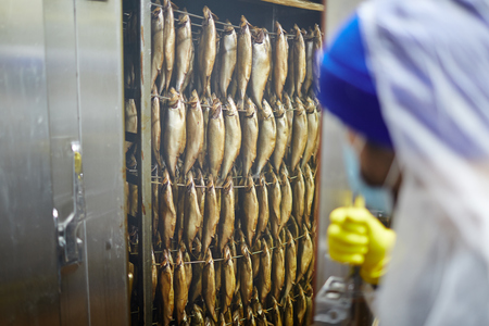 Several rows of anchovy or herrings being smoked in special camera