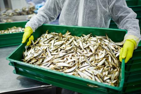 작업하는 동안 신선한 멸 치 상자를 들고 해산물 공장의 낀된 작업자 스톡 콘텐츠