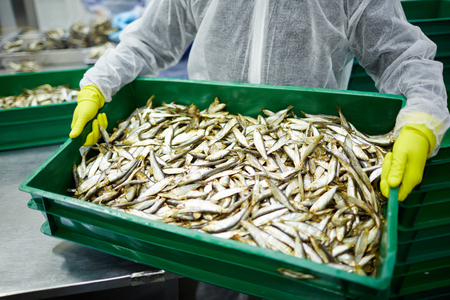Gloved worker of seafood plant carrying box with fresh anchovies during work