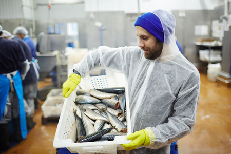 Staff of seafood produstion in coveralls looking at fresh mackerel in plastic box