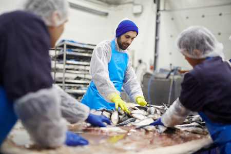 Group of seafood processing staff working with fresh sardines in plant