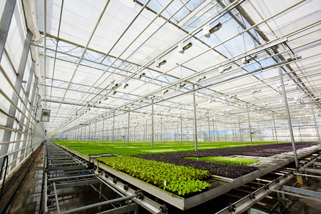 Seedlings in hothouse