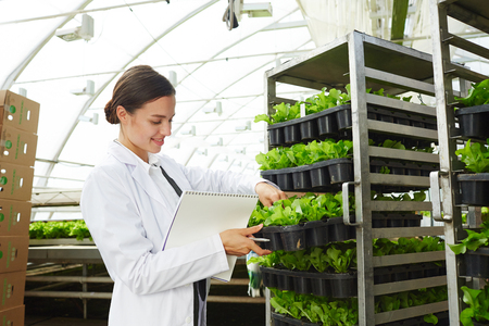 Young pretty woman in white overgrown looking at fresh organic lettuce