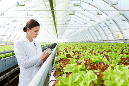 Young beautiful female agronomist making notes in pad while standing in large greenhouse with organic lettuce