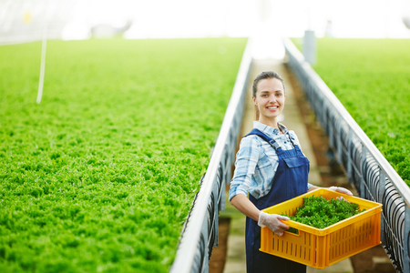 Portrait of young pretty female worker standing in industrial greenhouse, holding container with fresh organic lettuce and smiling at camera happily