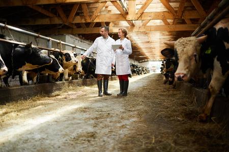 Specialists in kettlefarm