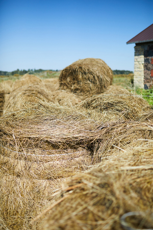 Hay stacks in farm