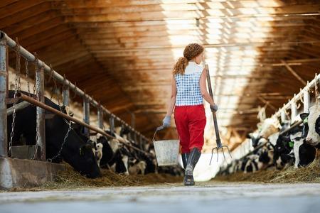 Prendre soin des vaches