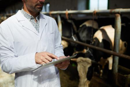 Tierarzt auf dem Bauernhof mit digitalem Tablet Standard-Bild