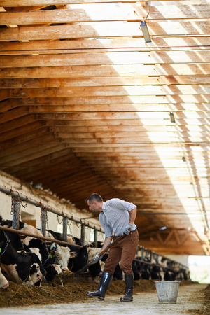 Farmer Cleaning Cowshed