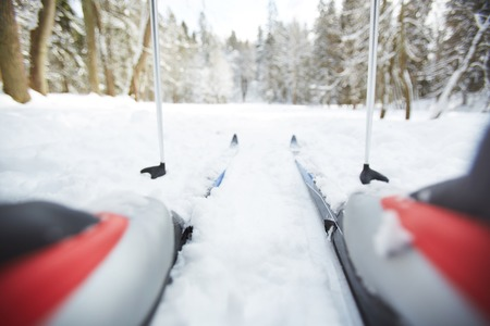Sticks and skis of active skier during training in winter forest on weekend