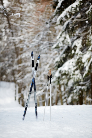 Crossed skis and two sticks in snow among firtrees in the forest on winter day
