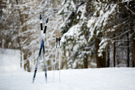 Two skiing sticks and crossed skies in snowdrift on background of firtrees in the woods 写真素材