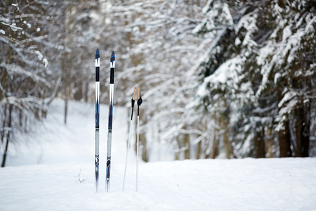 Skiing equipment stuck in snowdrift surrounded by fir trees in deep woods on winter day