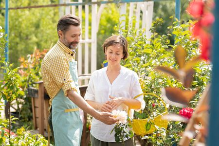 Contemporary gardener showing woman new sorts of white flowers growing in pots Archivio Fotografico