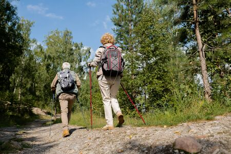 Rear view of two senior backpackers with trekking sticks moving down forest road 写真素材