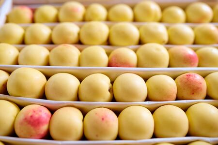 Several rows of fresh ripe yellow nectarines or apricots on fruit display Stock fotó