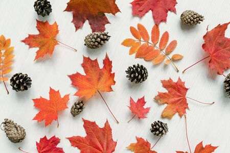Autumn background with red maple and rowan leaves and firtree cones