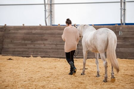 Young woman holding bridles of white racehorse while moving down sandy arena 스톡 콘텐츠