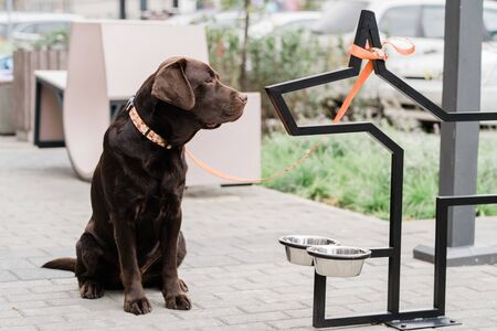 Cute brown labrador sitting outdoors by two bowls while waiting for his owner to give him food