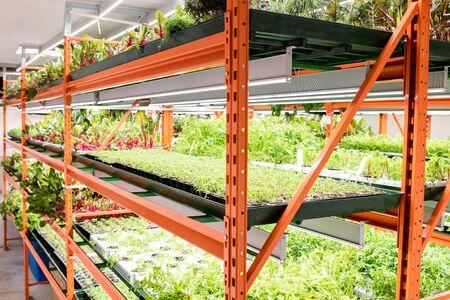 Shelves with green seedlings of various sorts of agricultural plants Reklamní fotografie