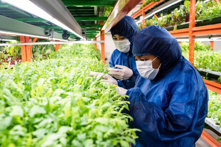 Researchers in protective workwear selecting new sorts of horticultural plants