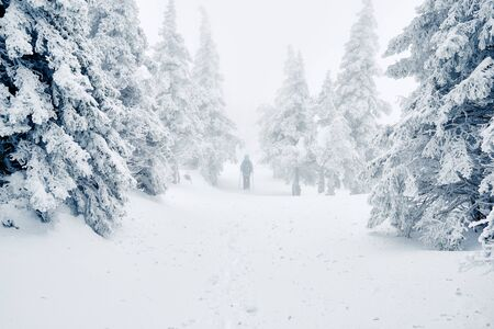 Hiker walking among snowy trees in winter forest or park after snowstorm