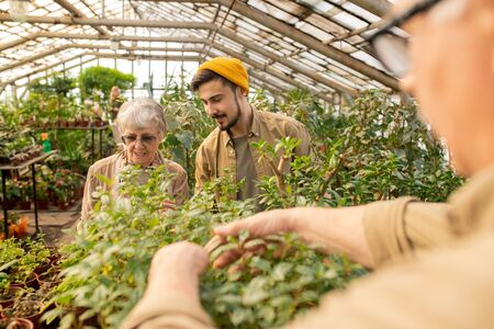 Young bearded man in cap asking grandmother about gardening while working with her in greenhouse Stock fotó
