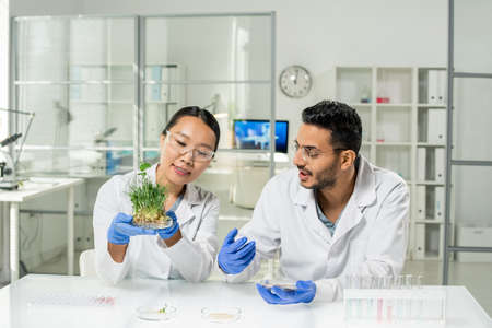 Young female researcher in gloves and whitecoat holding lab-grown soy sprouts 版權商用圖片