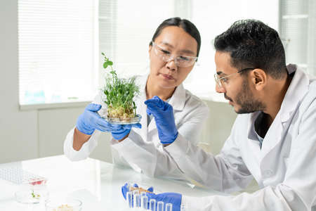 Female scientist holding green lab-grown soy sprouts while man going to take one