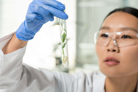Hand of laboratory worker looking at flask containing green lab-grown soy sprout 版權商用圖片
