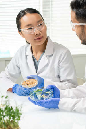 Two scientists holding petri dishes with wheat grains and lab-grown soy sprouts