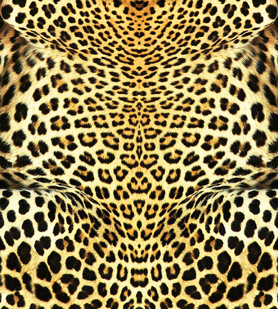 Leopard Backround photo