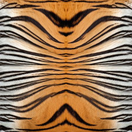 undomesticated cat: Tiger Leather Stock Photo