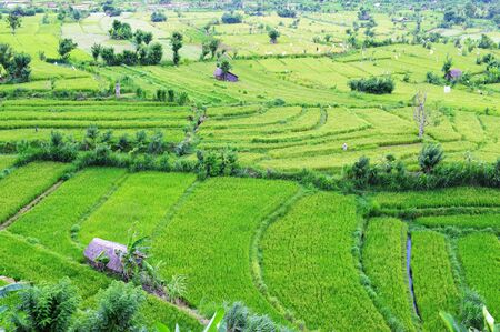 Paddy field and terrace in Bali, Indonesia photo