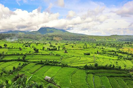 Paddy field in Bali, Indonesia photo