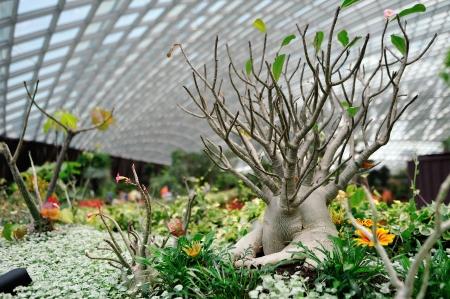 wintergarten: Sukkulenten in einem trockenen, k�hlen Wintergarten Lizenzfreie Bilder