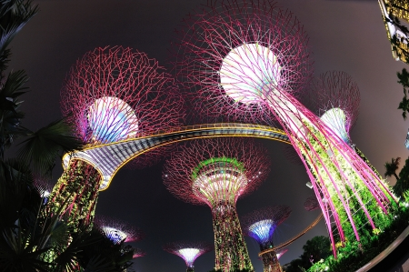 skyway: Super trees and OCBC skyway in the newly opened Gardens by the Bay in Singapore